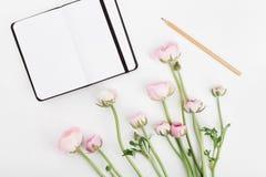 美丽的春天毛茛属从上面开花和在白色书桌上的空的笔记本 大模型 淡色 清洗文本的空间 库存图片
