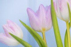 美丽的春天花静物画有木背景和ho 库存照片