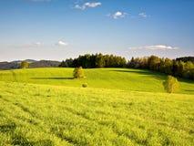 美丽的春天草甸 免版税库存图片