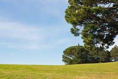 美丽的春天风景绿色草甸树和蓝天背景 免版税库存照片