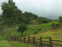 美丽的景色在乡下 库存图片