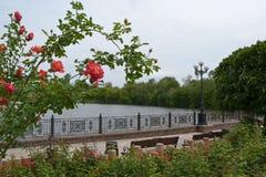 美丽的景色在公园-英国兰开斯特家族族徽灌木  免版税库存图片