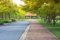 美丽的景色路或走道在公园有绿色自然和阳光背景 免版税库存图片