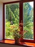 美丽的景色通过一个木窗口的窗口与在与一朵丰富的花的一块窗口基石种植的罐的 免版税图库摄影