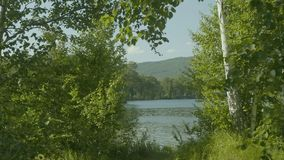 美丽的景色通过在一个湖的大绿色树在镇外面 免版税库存照片