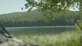 美丽的景色通过在一个湖的大绿色树在镇外面 免版税图库摄影