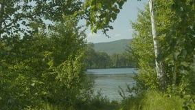 美丽的景色通过在一个湖的大绿色树在镇外面 免版税库存图片