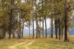 美丽的景色,小组树在chitwan国立公园尼泊尔 免版税库存图片