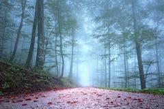 美丽的有雾的季节性森林公路 免版税库存图片