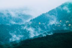 美丽的有雾的神秘的山 在我的杉树的雾云彩 免版税库存图片