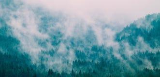 美丽的有雾的神秘的山 在我的杉树的雾云彩 图库摄影
