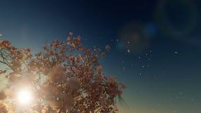美丽的木兰树,落的花,反对日落,4K 库存例证