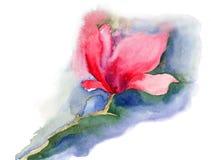 美丽的木兰花 免版税库存照片