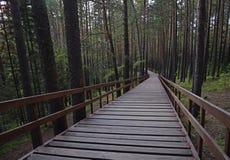 美丽的木头,长的台阶在绿色森林 库存照片