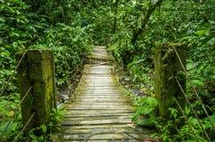 美丽的木桥在小山有湿气植物的雨林里,位于Mindo 库存照片