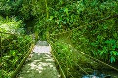 美丽的木桥在小山有湿气植物的雨林里,位于Mindo 免版税库存图片