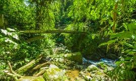 美丽的木桥在小山有湿气植物的雨林里,当小河流动,位于Mindo 库存图片