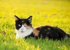 美丽的杂色猫五颜六色的草 免版税库存图片