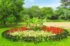 美丽的杂色的花圃在格林威治公园,伦敦在一个晴朗的夏日 库存照片