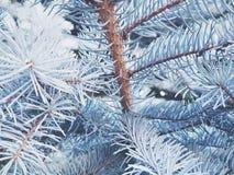 美丽的杉木 免版税图库摄影