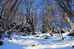 美丽的村庄芬兰森林红色s雪传说冬天 图库摄影