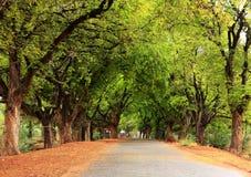 美丽的村庄路在印度 免版税库存图片