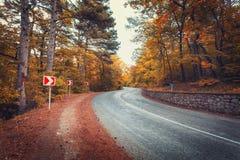 美丽的柏油路在日出的秋天森林里 免版税库存图片
