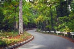 美丽的柏油路在日出的秋天森林里 库存图片