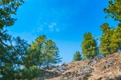 美丽的树和积雪的山使克什米尔stat环境美化 免版税库存照片