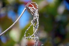 美丽的树和花 免版税库存图片