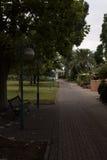 美丽的树和道路 免版税库存照片