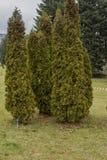 美丽的树在一个环境公园在瓦尔纳 免版税库存照片