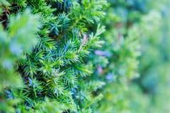 美丽的树在庭院里 免版税库存图片
