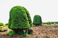 美丽的树在庭院里 免版税库存照片