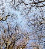 美丽的树在森林里 库存图片