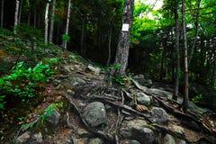 美丽的树在阿巴拉契亚足迹的森林在新罕布什尔美国 库存图片