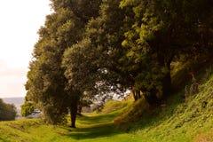 美丽的树胡同在秋天公园, Carisbrooke城堡,纽波特,怀特岛郡,英国 免版税库存图片