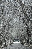 美丽的树道路 库存照片