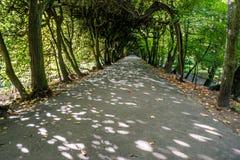 美丽的树alleyl在公园 免版税库存图片