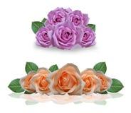 美丽的桃红色和橙色玫瑰 免版税库存照片
