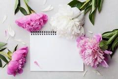 美丽的桃红色和白色牡丹开花与在灰色石背景的空的笔记本,您的文本的拷贝空间或设计,顶视图 免版税库存图片