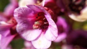 美丽的桃红色和红色夏天花特写镜头 库存图片