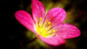美丽的桃红色和红色夏天花特写镜头 免版税库存照片
