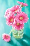 美丽的桃红色大丁草开花在花瓶的花束 免版税库存图片