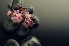 美丽的桃红色温泉在水湿Backgr的温泉热的石头开花 库存照片