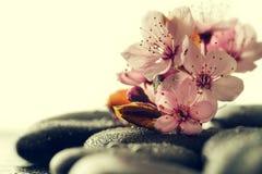 美丽的桃红色温泉在水湿Backgr的温泉热的石头开花 图库摄影
