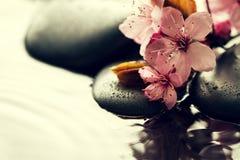 美丽的桃红色温泉在水湿Backgr的温泉热的石头开花 免版税库存照片