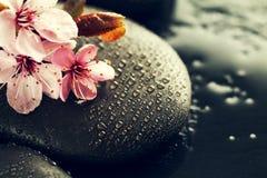 美丽的桃红色温泉在水湿Backgr的温泉热的石头开花 免版税图库摄影