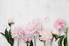 美丽的桃红色牡丹在与拷贝空间的白色石桌上开花您的文本顶视图和平展位置样式的 免版税库存图片