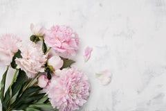 美丽的桃红色牡丹在与拷贝空间的白色石背景开花您的文本顶视图和平展位置样式的 库存照片